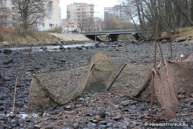 шипучка река рыбалка