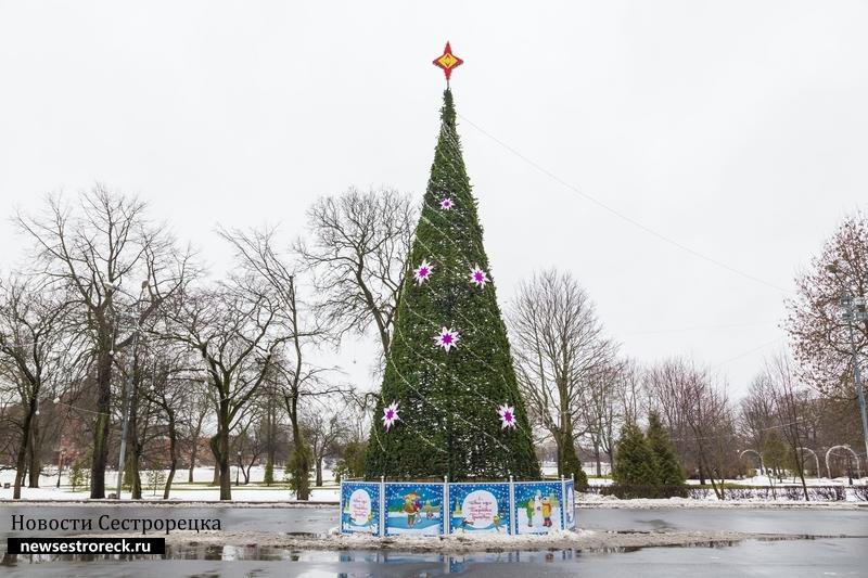 Сестрорецкую елку назвали одной из роскошных в Петербурге