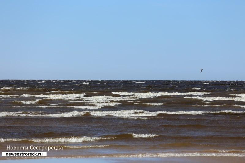 В Финском заливе пропал петербуржец на катамаране