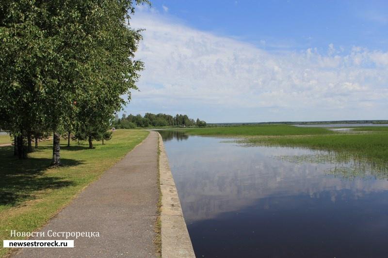 В Сестрорецке на болоте нашли труп