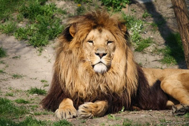 В Сестрорецке может появиться зоопарк