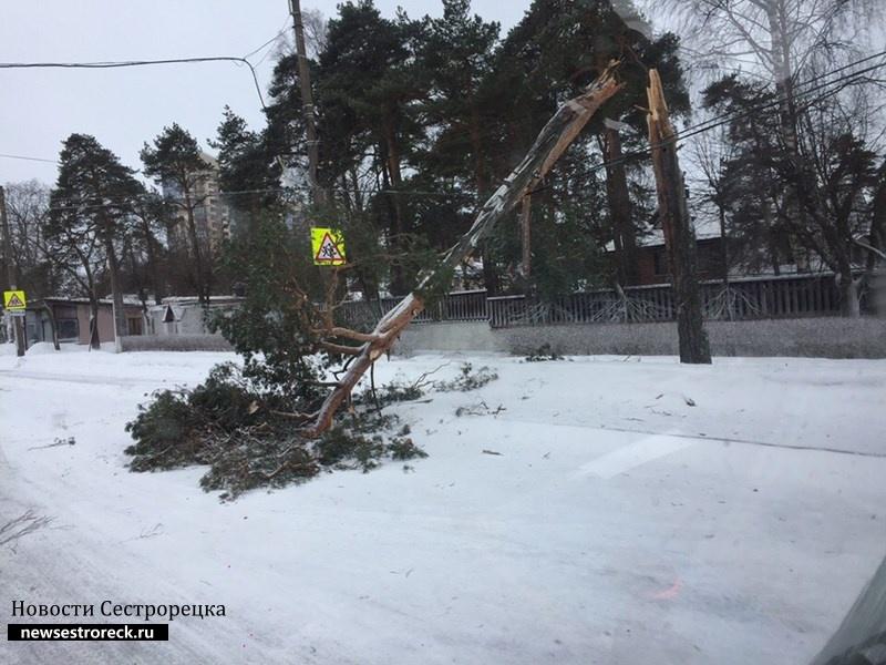 На ул. Коммунаров упала сосна
